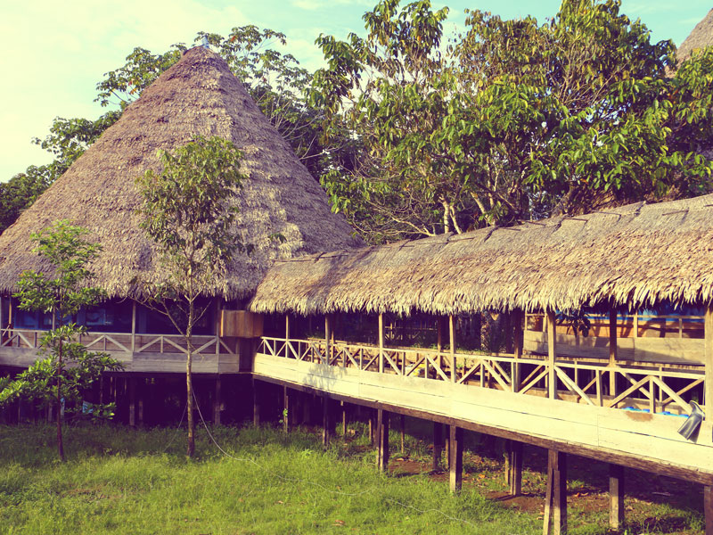 Your Most Unforgettable 7-Day Ayahuasca Trip | Pulse Tours
